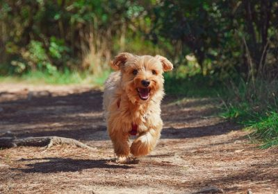 Encourage your dog to go out for a walk